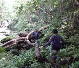 沢登り森中