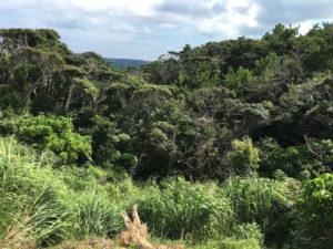 ジャングル上から